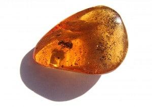 une ambre avec un insecte
