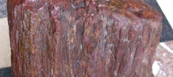 tronc de bois fossile