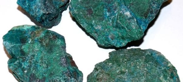 chrysocolles brutes